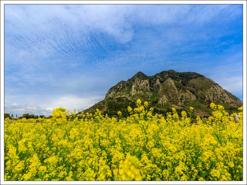 목진석-제주삼방산의 봄.jpg
