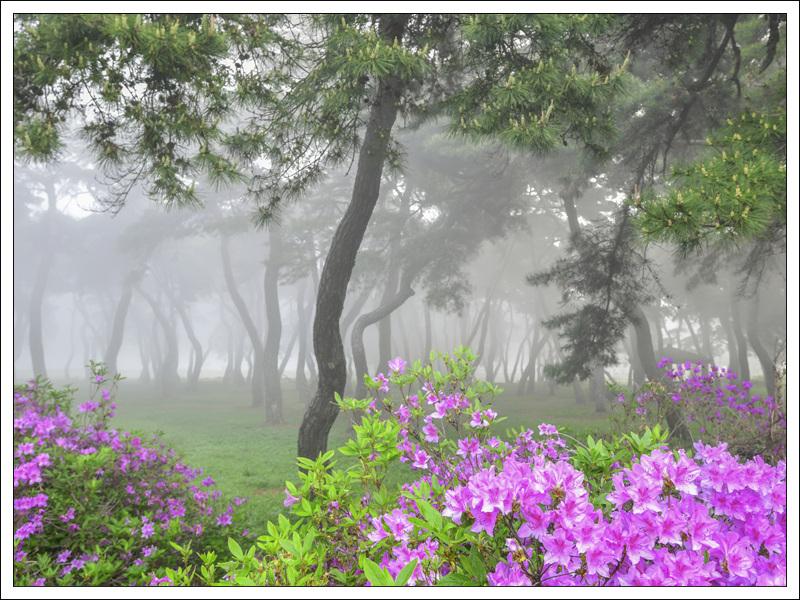 김헌중-임한리 소나무.jpg